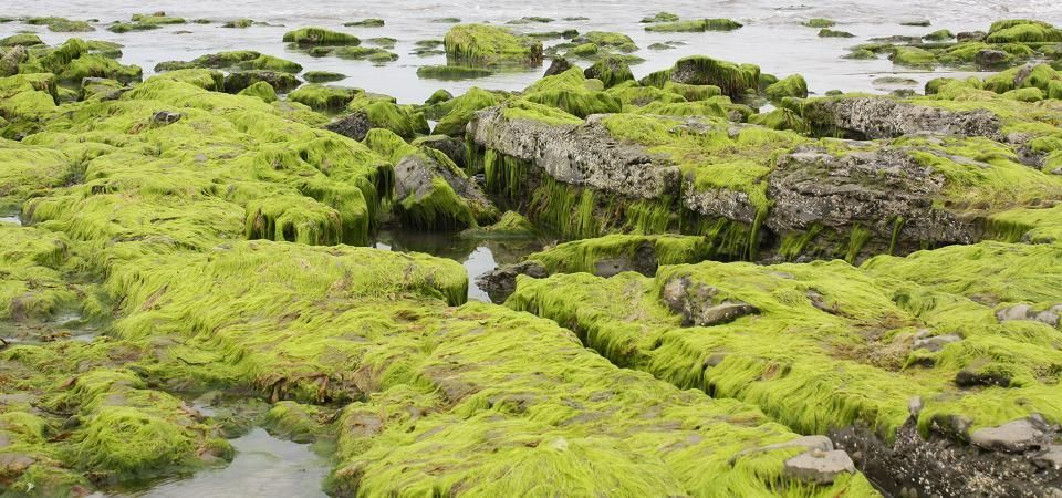 Seaside Bathroom Department - image of seaweed covered rocks
